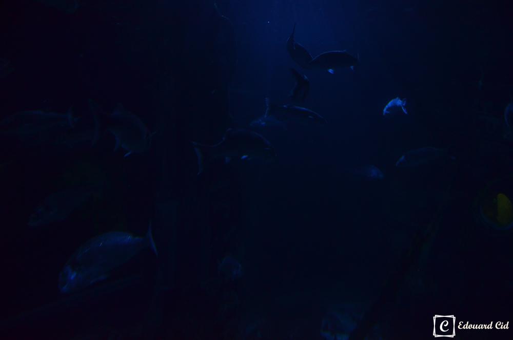 Poissons de Sealife