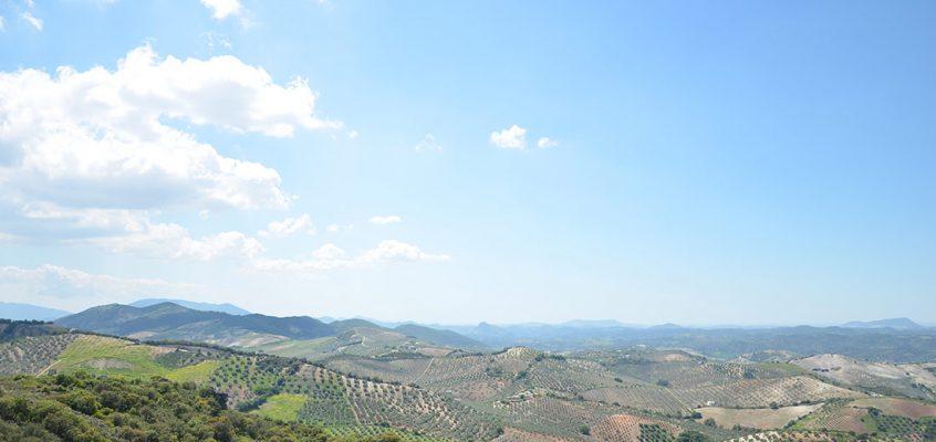 Dans la campagne andalouse