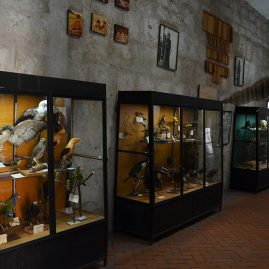 Musée la Recoleta - Salle d'Amazonie